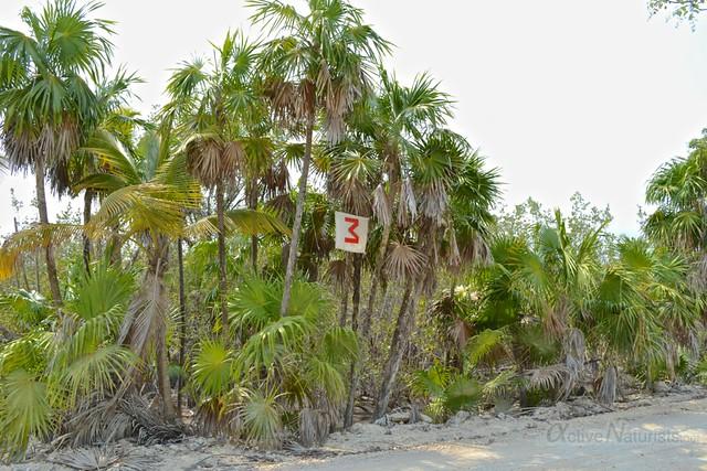 naturist 0011 Sian Kaan beach, Quintana Roo, Mexico
