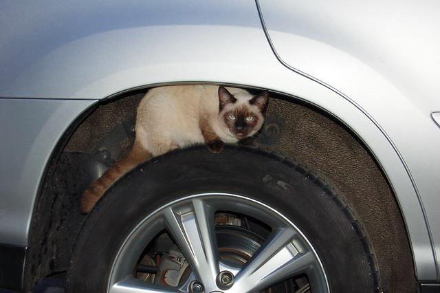 Feline Wheel
