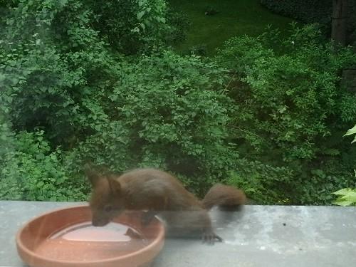 Hungriges Eichhörchnchen 3