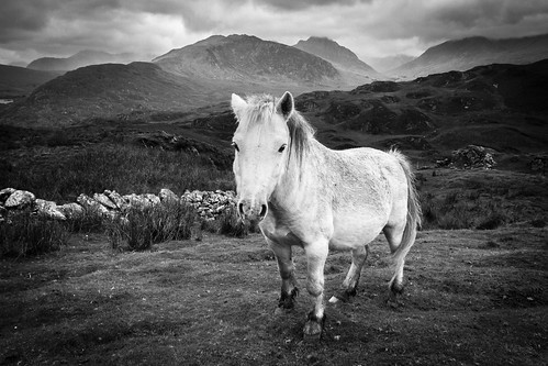 I walk the hills alone - Carneddau Pony