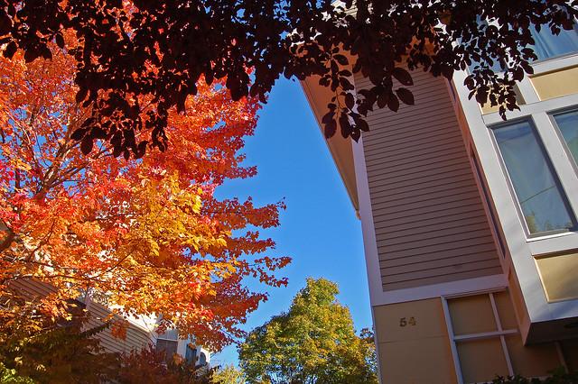 Autumn Home