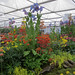Kevock Garden Plants