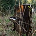 20130505-sam_bailey_forest_piano-025
