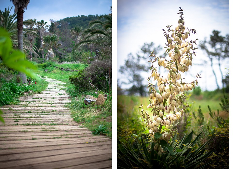 Trails and exotic flowers