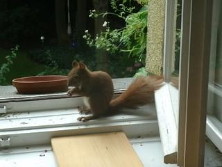 Eichhörnchen zähmen 3