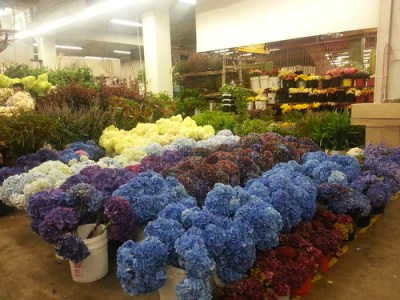 Oregon Coastal Flowers at the Los Angeles Flower Market.