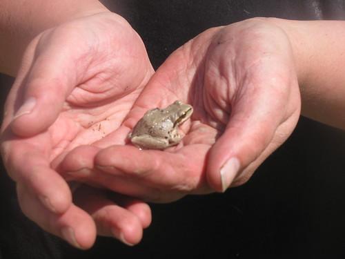 froggie by jaklumen & family
