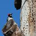 Acorn Woodpecker Douglas Preserve