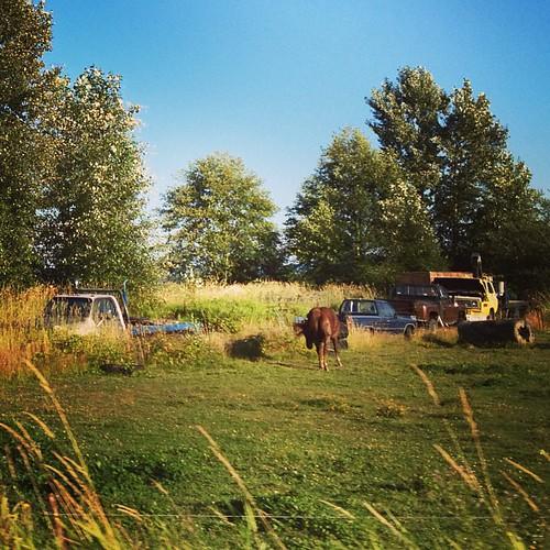 The Farm - Skagit County WA by @MySoDotCom