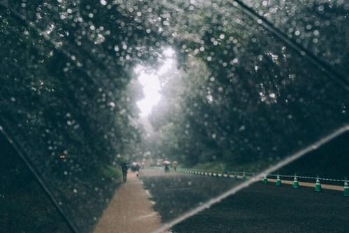 Rainy Day In Meiji Jingu
