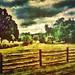 Fenced landscape