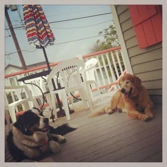 Miss you already Galveston breezes. We all do.