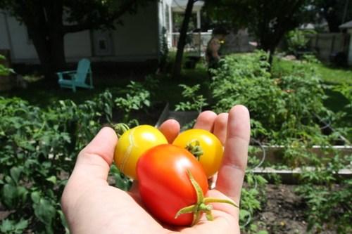 Garden Update (August 2013) 014