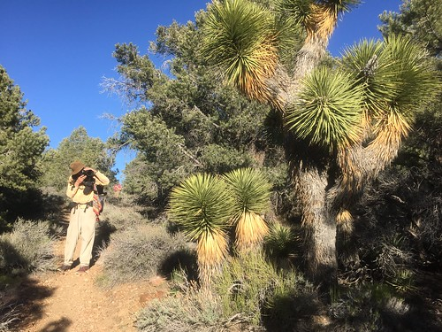 PCT Day 21