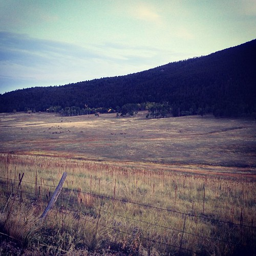 Listening to the Elk in the meadow near Evergreen CO by @MySoDotCom