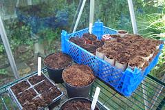 2013 06 01_gardening_0004
