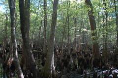 Beidler Forest-003