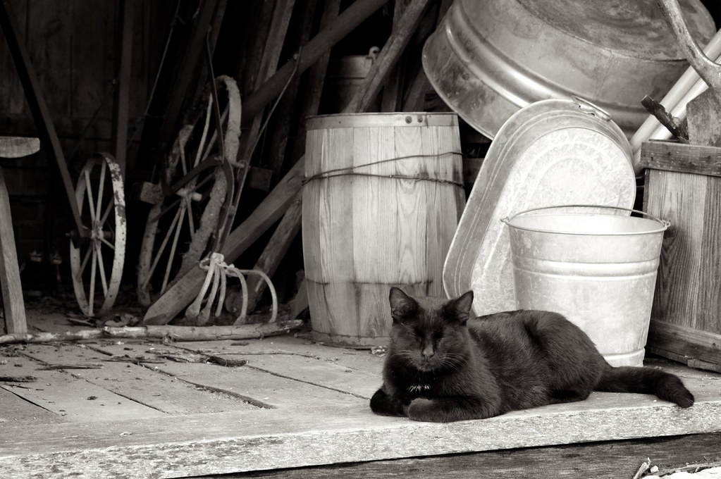 New Cat at the Farm