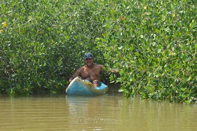 naturist 0002 mangroves, Progreso, Yucatan, Mexico