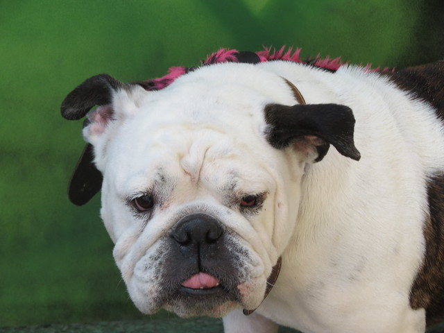 Upfest dog - cute!