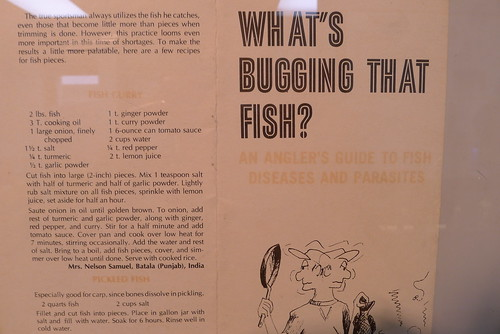 What's bugging that fish?