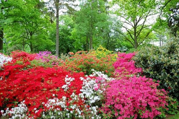 Rhododendron Park Bremen | No Apathy Allowed