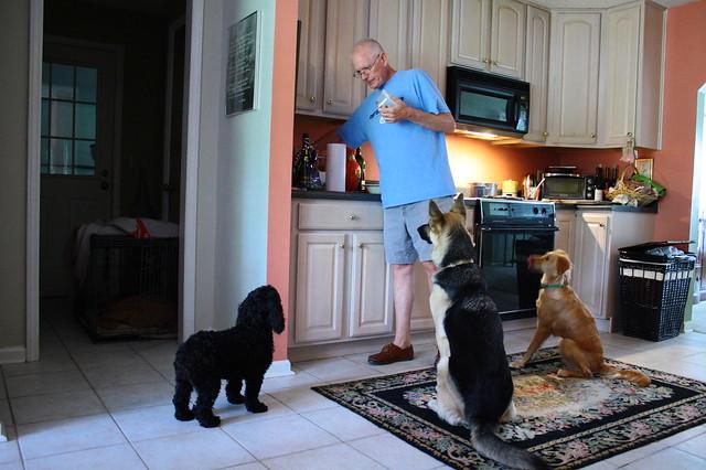 Summoning the dogs