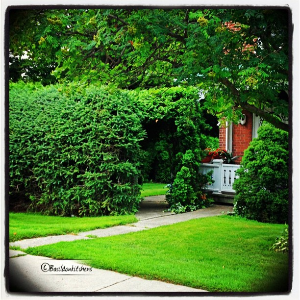July 8 - path {invitation to explore a hidden garden} #fmsphotoaday #bloomfield #garden #explore #path #welcome