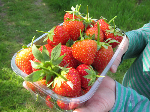 Our Strawberries