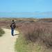 Heath in the Dunes