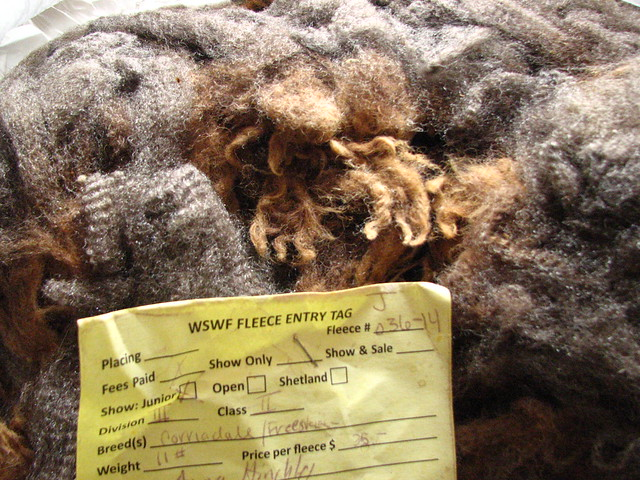 Corriedale Friesian Wool Fleece