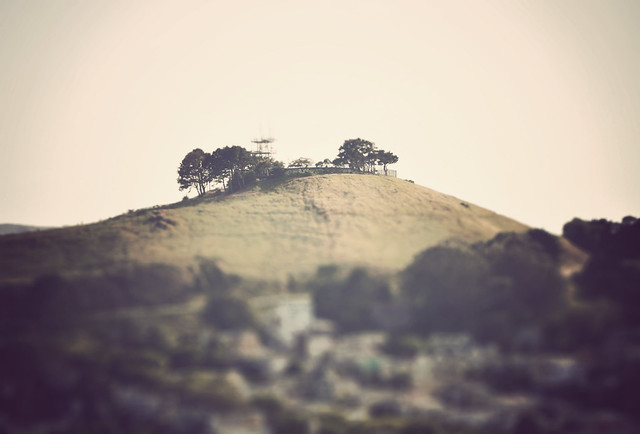 Miniature Bernal Hill