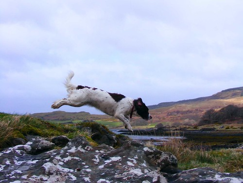 Jumping by Calum Hall Tobermory
