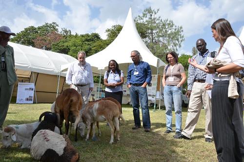 Livestock and Fish ethiopia value chain marketplace