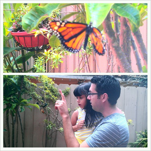 The butterfly is finally out of the chrysalis