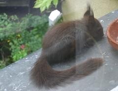 Eichhörnchen 9