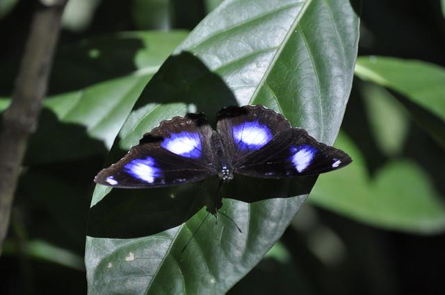 2013-06-03 Butterfly park