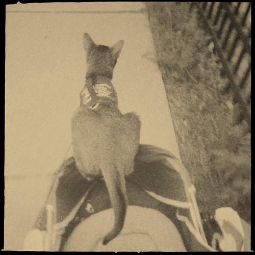 hipstajakestrollerIMG_1913