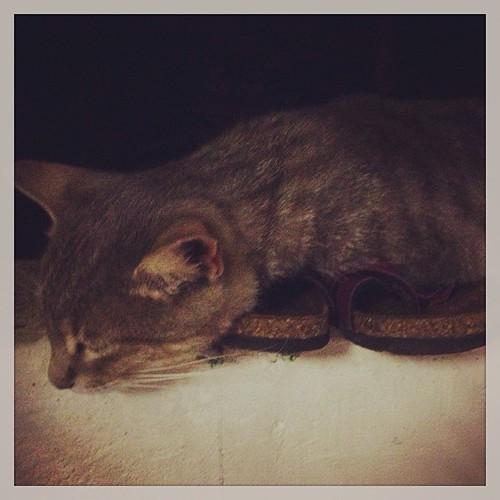 Anche lui ha sentito il topino #vdb #agesci #scout #lupetti #fo10