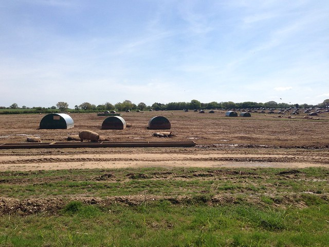 Pig farm, near Gressenhall