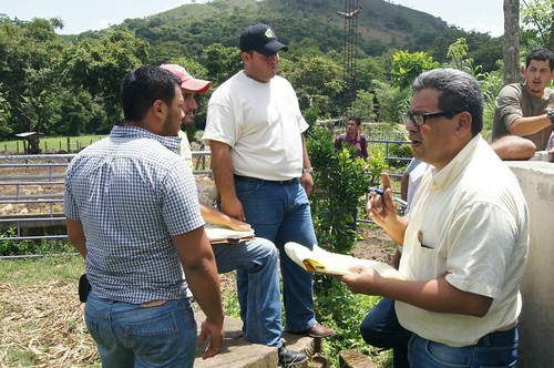 Field visit at the Livestock and Fish Nicaragua impact pathways and planning workshop