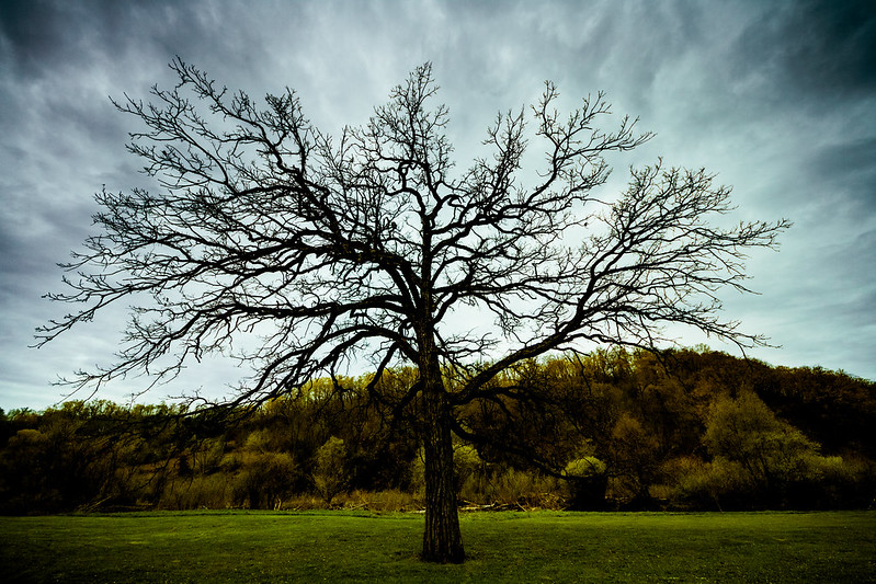 Westby's Tree_1746