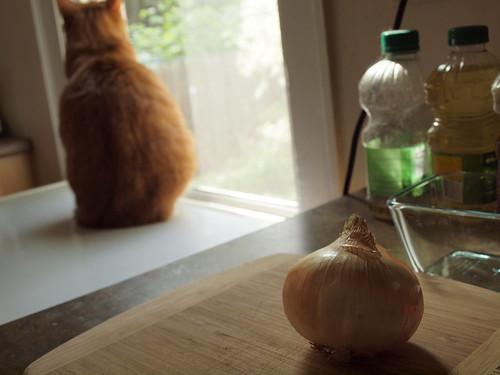 Preparing to make soup