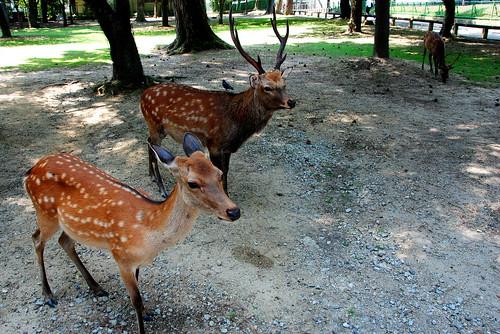 Nara 021r