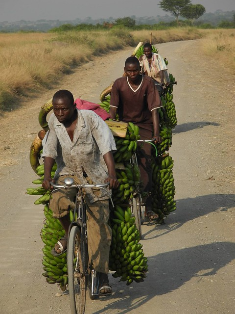 Taking bananas to market. The market is 15 miles away.
