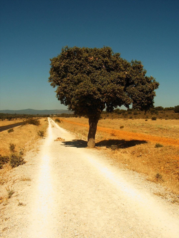2. Camino y encina. Autor, Jule_Bertin