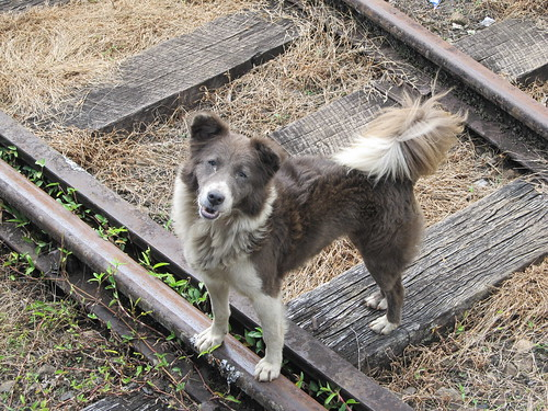 Doggy on the tracks