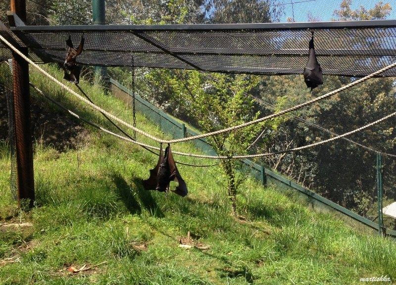 Oakland Zoo (15)