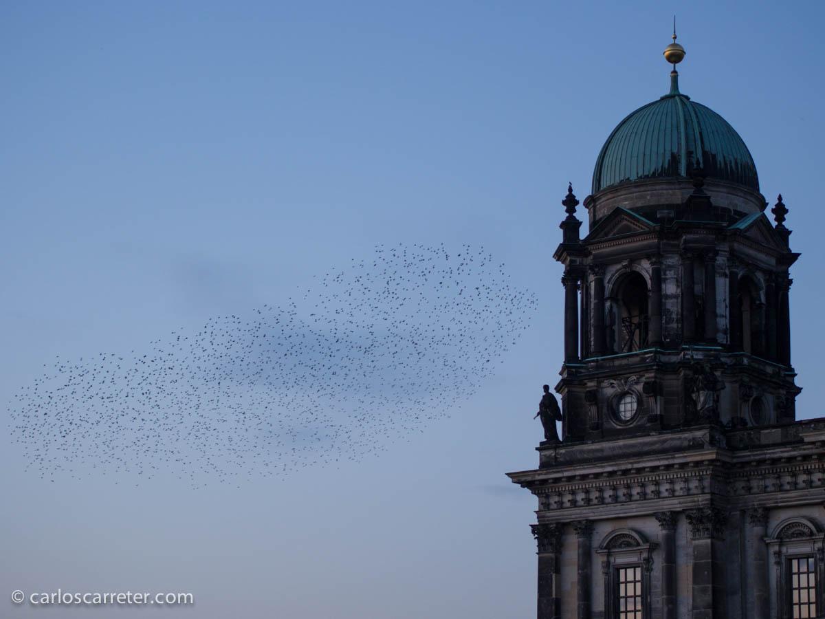 Estorninos en la Berliner Dom