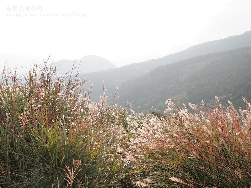 台北景點,花季,陽明山 @薇樂莉 Love Viaggio   旅行.生活.攝影